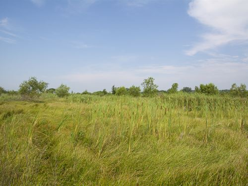 Wetlands & Wildlife : Silver Lake : Shawnee County : Kansas