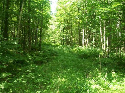 190 Acres of Prime Hunting Land MA : Kronenwetter : Marathon County : Wisconsin