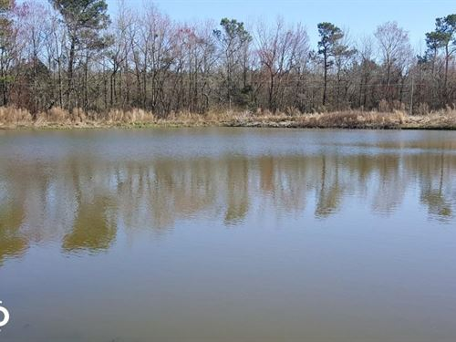 Piney Woods Road Land For Sale : Willard : Pender County : North Carolina