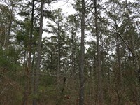 Woody Road East : Adairsville : Gordon County : Georgia