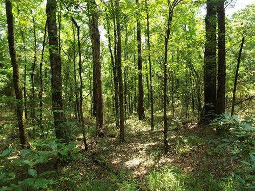 Hardwood Timber Investment With RE : Idabel : McCurtain County : Oklahoma