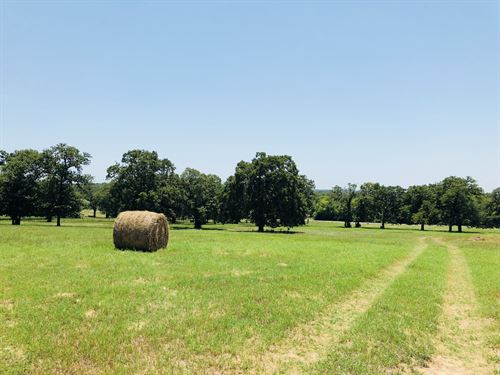 31.51 Acres, Fm 487 N : Rockdale : Milam County : Texas