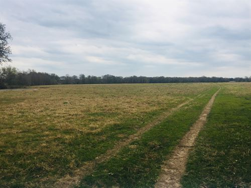 162.84 Acres, Elmo Road : Calvert : Robertson County : Texas