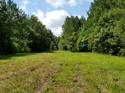 38 Ac, Timberland & Hunting Tr : Jena : La Salle Parish : Louisiana