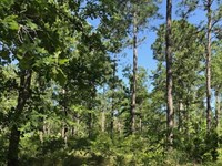 Timber Investment - Peacock Tract : Faceville : Decatur County : Georgia