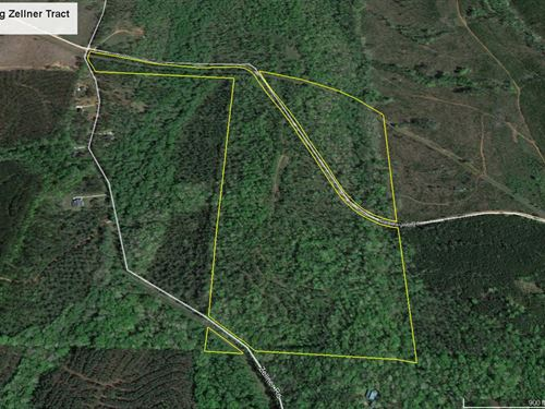 92.7 Acre Big Zellner Tract : Forsyth : Monroe County : Georgia
