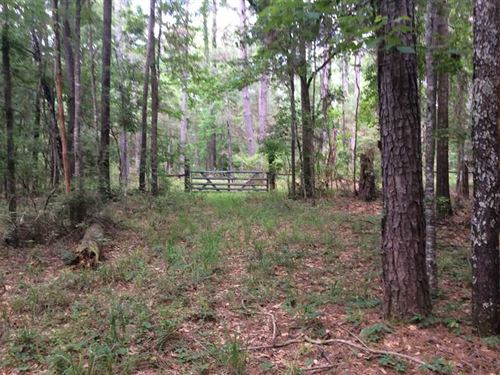 Spring Creek Tract, Rapides Parish : Elmer : Rapides Parish : Louisiana