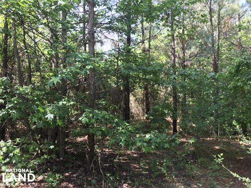 60.29 Acres Timberland & Hunting Pr : Sheridan : Grant County : Arkansas