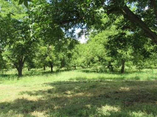 Texas Pecan Orchard In Lamar County : Arthur City : Lamar County : Texas
