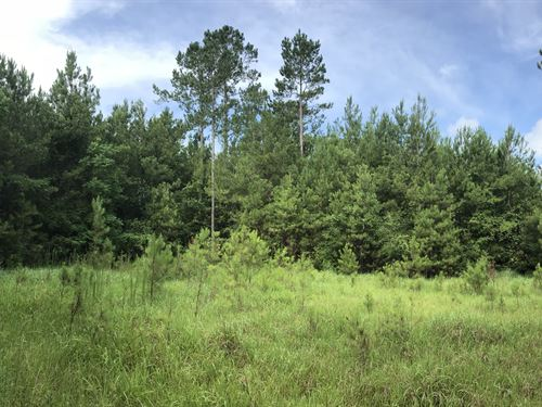 Pine Forest Road Tract : McDavid : Escambia County : Florida