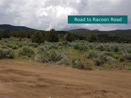 21 Acres Raccoon Road, Ca : Termo : Lassen County : California
