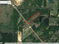 32 Acres of Pecan Orchards, fi : Pocahontas : Hinds County : Mississippi