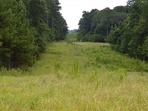 84 Acres of Excellent Hunting And : D'lo : Simpson County : Mississippi