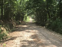 Big Sky Tract - 77 Acres : Banks : Pike County : Alabama