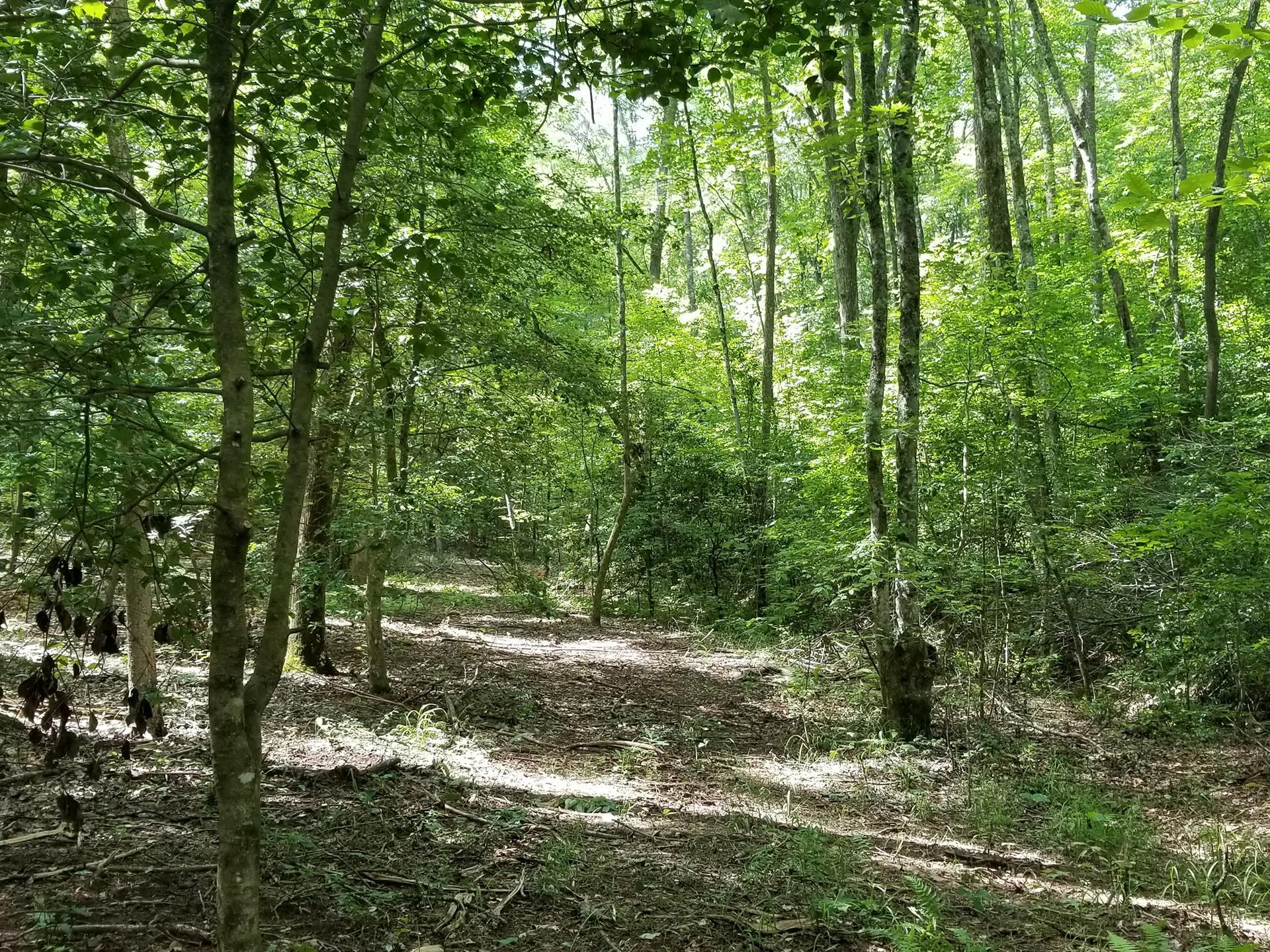 Granny Hughes Tract : Ranch for Sale : Mineral Bluff : Fannin County :  Georgia