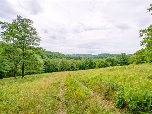 50 Ac Off Natchez Trace Pkwy : Williamsport : Hickman County : Tennessee