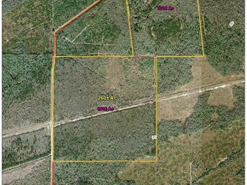 100 Acres Sawgrass : Mauriceville : Orange County : Texas
