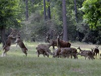 Awesome Exotic Game Ranch 1.5 Hour : Corrigan : Polk County : Texas