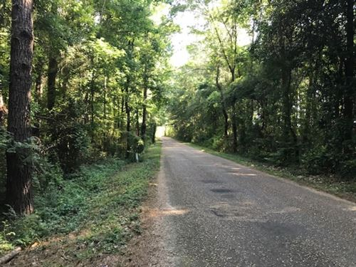 40 Acres Gibson Road With Mature Ti : McComb : Pike County : Mississippi