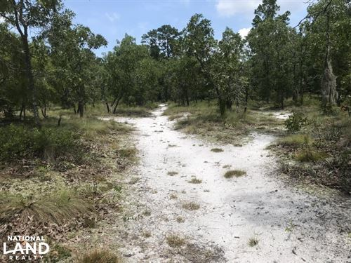 Shaw Highway Tract 54.27 Acres : Rocky Point : Pender County : North Carolina