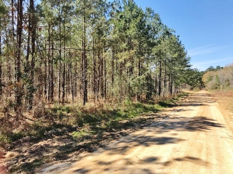 370 Acres Hunting Timber Land For : Woodville : Wilkinson County : Mississippi