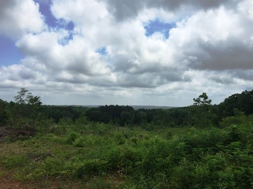 Tract 1539 W- Sealed Bid Land Sale : Adamsville : McNairy County : Tennessee