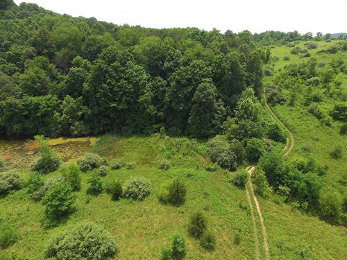 Luther Jones Rd - 54 Acres : Jackson : Ohio