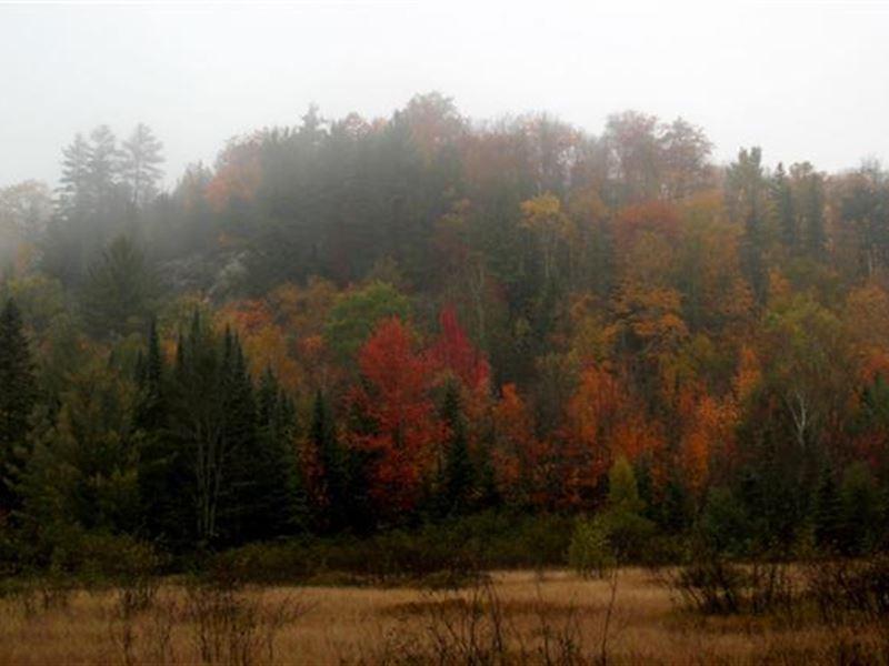 Timberland Tr Spurr Twp 1109241 : Michigamme : Baraga County : Michigan