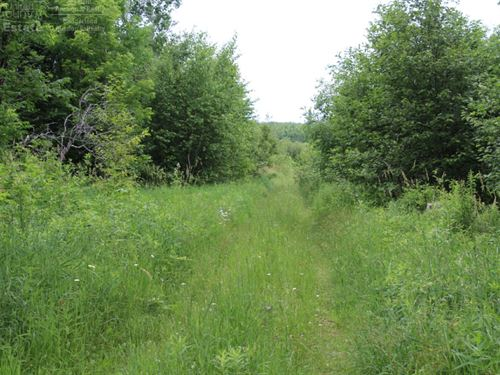 Secluded, Private 80 Acres : Rib Lake : Taylor County : Wisconsin