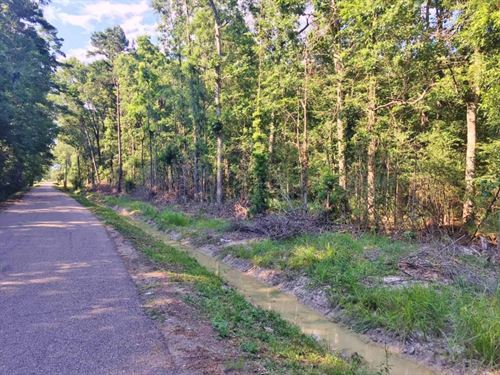 Acreage For Sale Springfield, Livin : Springfield : Livingston Parish : Louisiana