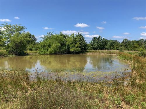 18.5 Acres In Hopkins County : Dike : Hopkins County : Texas