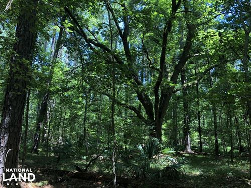Yemassee Small Wooded Parcel : Yemassee : Hampton County : South Carolina