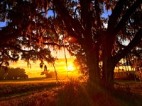 220-Acre Ranch On Bystre Lake : Brooksville : Hernando County : Florida