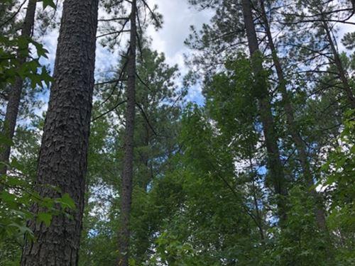 Merchinson Tract : Batesburg : Saluda County : South Carolina