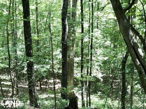 Hamilton Creek Hunting And Timber : Spruce Pine : Franklin County : Alabama