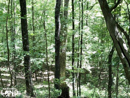 Hamilton Creek Hunting And Timber : Spruce Pine : Franklin County : Alabama