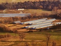 6 Broiler Houses Tyson Contract : Yellville : Marion County : Arkansas