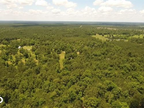 41 Acre Ranch / Homesite : Corrigan : Polk County : Texas