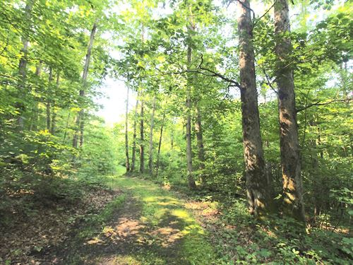 Old Camp Rd - 43 Acres : New Matamoras : Monroe County : Ohio