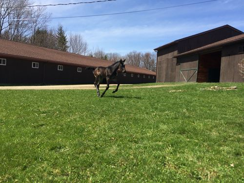 Profitable Turnkey Horse Farm : Binghamton : New York County : New York