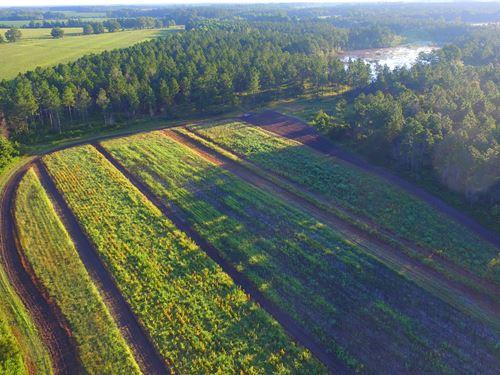 196Ac Farm W/ Ag, Lake, Timber : Cobbtown : Tattnall County : Georgia