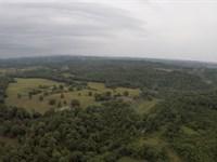 Ouachita National Forest Plantation : Mt Ida : Montgomery County : Arkansas