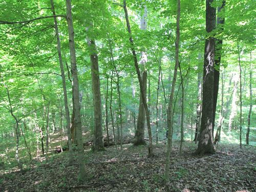 Tr 135 - 33 Acres : Logan : Perry County : Ohio