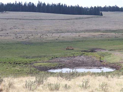 Rule Creek Ranch : Divide : Teller County : Colorado