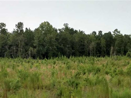 15.16 Acres Emanuel County, GA : Summertown : Emanuel County : Georgia