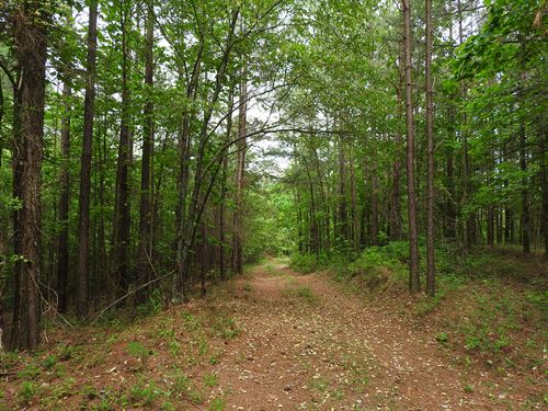 61.36 Acres Ludville Hwy 53 - 9692 : Fairmount : Pickens County : Georgia