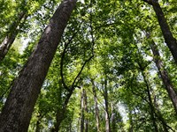 Ashpole Central Tract : Fairmont : Robeson County : North Carolina