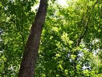 Ashpole North Tract : Fairmont : Robeson County : North Carolina