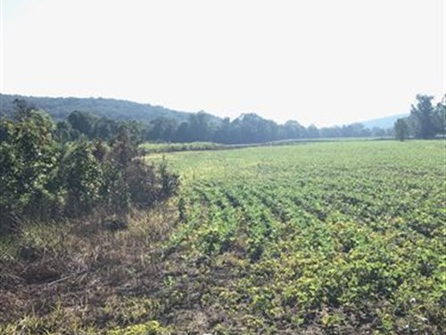 One-Of-A-Kind North Al Hunting Land : Woodville : Jackson County : Alabama