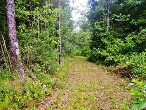 91.83 Acres Home Site/ Hunting : Smithdale : Amite County : Mississippi